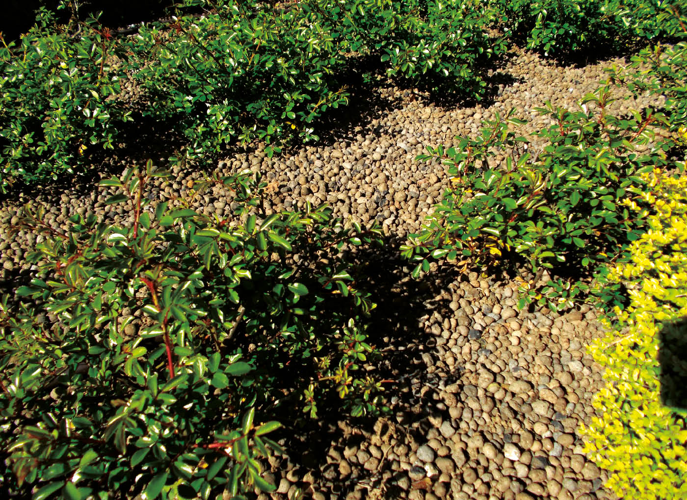 argilla-espansa-pacciamatura-agrileca-P43-8