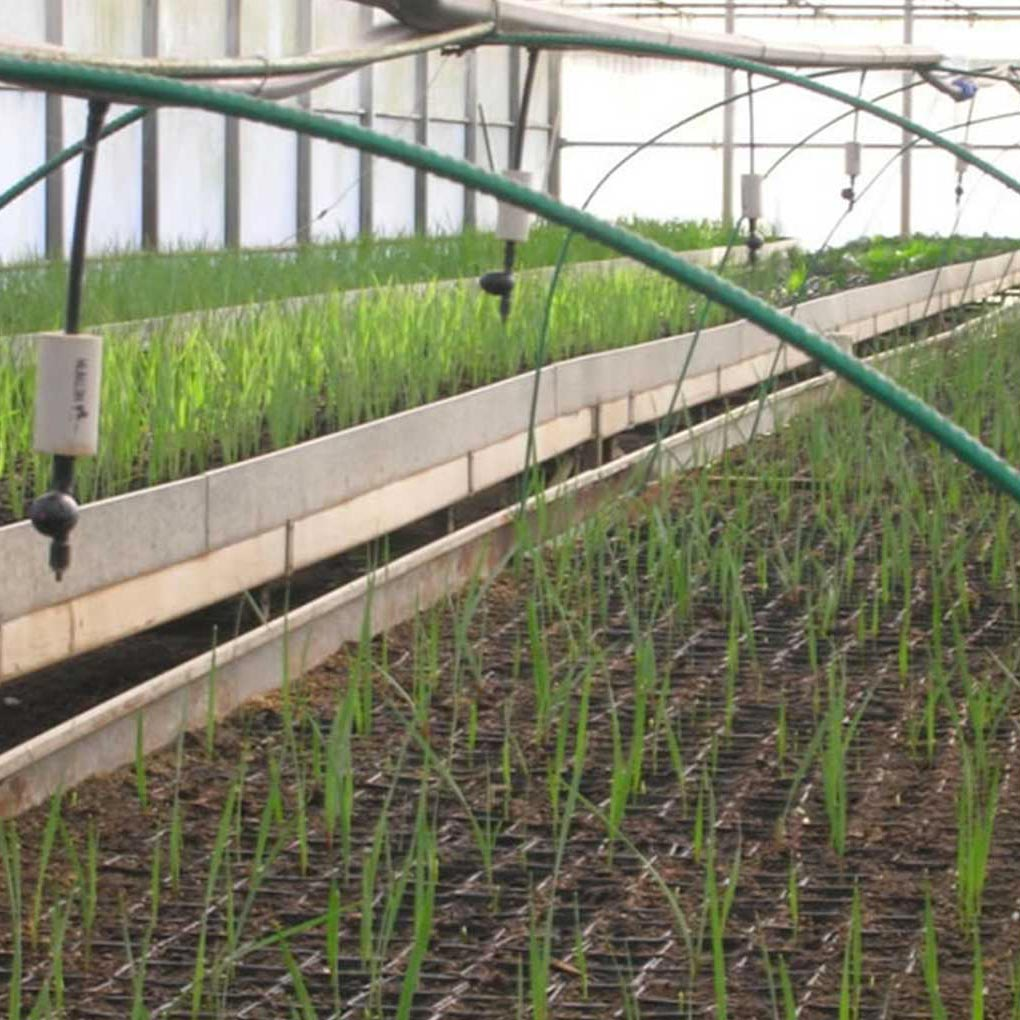 Substrate for Plant Propagation by Seed and by Cutting